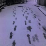 大雪\(◎o◎)/!